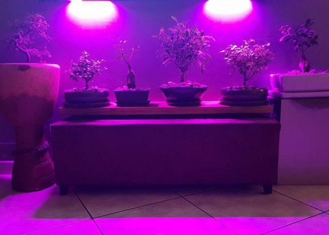 led horticole